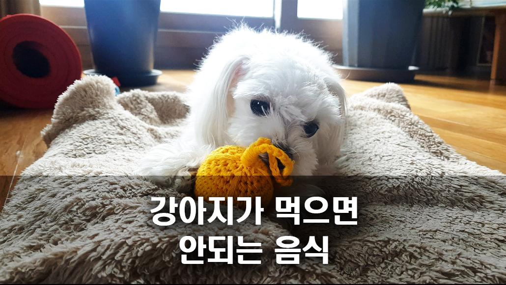 강아지사료 강아지간식 강아지우유.jpg